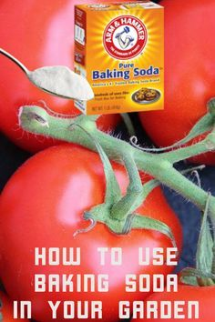 How To Use Baking Soda In Your Garden Comment Planter Des