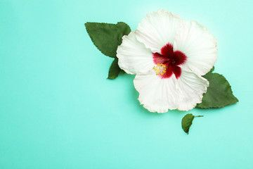 Beautiful Tropical Hibiscus Flower With Leaves On Turquoise Background Flat Lay Space For Text Ad Flower In 2020 Hibiscus Flowers Turquoise Background Hibiscus