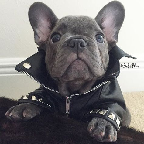 """Does this Moto Jacket make my ears look big?"", Balou Blue, a very Self…"