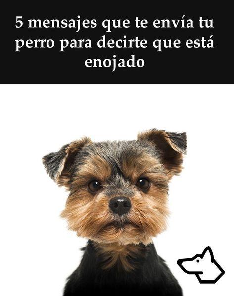 600 Ideas De Caninos Cosejos Perros Mascotas Entrenamiento Perros