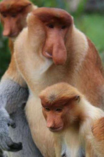 Monkeys Show Size Really Does Matter Monkeys Wild Animals Jungle Animals Cute Animals