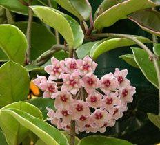 22 best indoor flowering plants images on pinterest flowers plants and indoor gardening