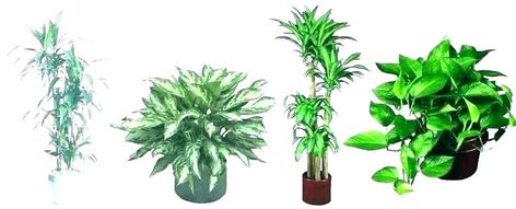 Tall Indoor Plants Low Light Large House Best Real Plant