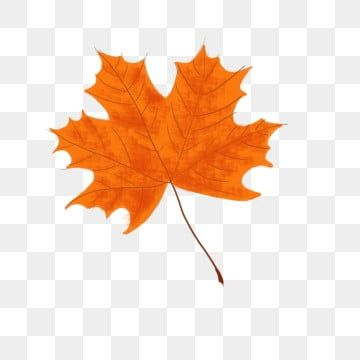 Autumn Red Maple Leaf Floating Falling Material Maple Leaf Clipart Hand Painted Red Maple Png Transparent Clipart Image And Psd File For Free Download Leaf Clipart Maple Leaf Clipart Leaf Illustration