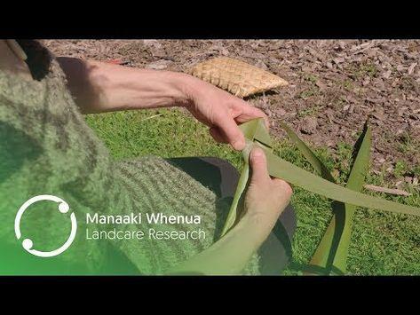 Flax Harakeke Weaving In New Zealand Youtube Flax Weaving Weaving Tutorial Weaving