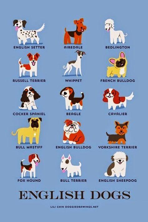 English Dog Breeds English Dogs Dog Breeds Dog Breeds List