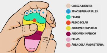 11 Ideas De Para Limpiar Los Pulmones Limpiar Los Pulmones Estiramientos De Hombros Ejercicios Para El Cuello