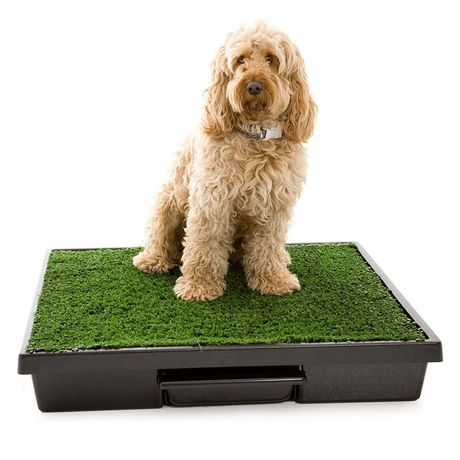 Pet Loo Dog Potty Dog Toilet Easy To Clean 3 Sizes Dog Toilet Dog Potty Pets