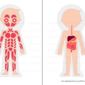 الجهاز العضلي الجهاز الهضمي جسم الانسان مشروع أجهزة الجسم Jpg Fictional Characters Character Art