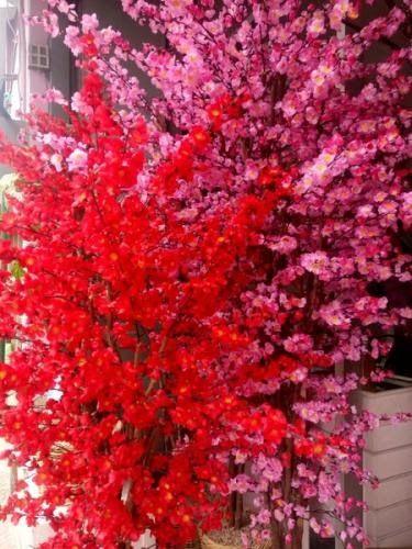 Foto Bunga Sakura Hias Bunga Sakura Imlek Gong Xi Fa Cai Sakura Pink Sakura Merah Sakura Jual Bunga Sakura Plastik Bunga Hia Taman Bunga Bunga Bunga Sakura