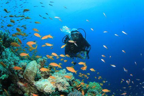 Diving Into The Entrepreneurial Sea