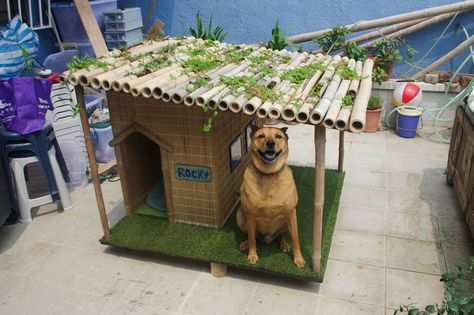 His Old Dog House Couldn T Stand Up To The Elements What He Built Instead Is The Coolest Thing Story Tropical Dog Houses Dog House Plans Cat House Diy