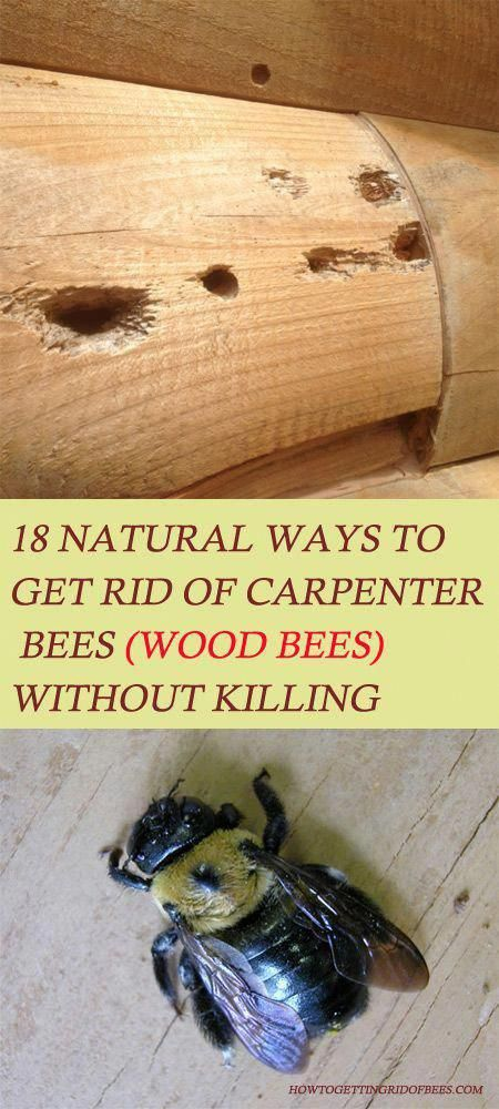 Learn How To Get Rid Of Carpenter Bees Wood Bees Infestation At