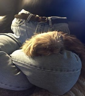 Diy Jeans Dog Bed Create A Comfy Permanent Lap For Your Pup To Lounge On Even When You Re Up And Busy Use Recycled Jeans Diy Dog Bed Dog Bed Diy