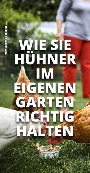 Huhner Im Garten Halten So Geht S Modern Design Chickens Backyard Chickens Permaculture Gardening
