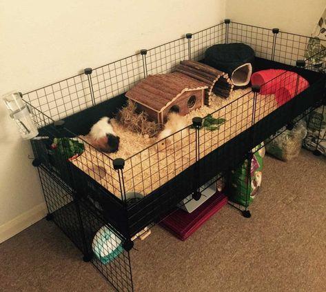 Guinea Pig Hutch, Guinea Pig House, Pet Guinea Pigs, Guinea Pig Care, Diy Guinea Pig Toys, Cavy Cage, Pet Cage, Indoor Guinea Pig Cage, Cages For Guinea Pigs