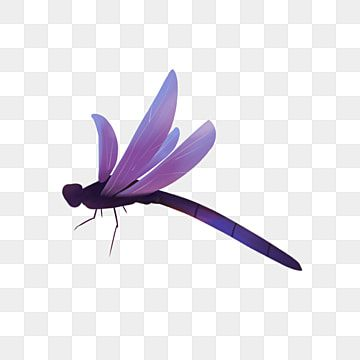 Purple Dragonfly Beneficial Insect Purple Dragonfly Beneficial Insects Png Transparent Clipart Image And Psd File For Free Download Flower Frame Purple Abstract Purple Watercolor