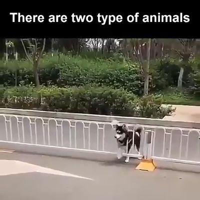 Two type of animal: Amazing and MORE Amazing - #Amazing #animal #type #watches