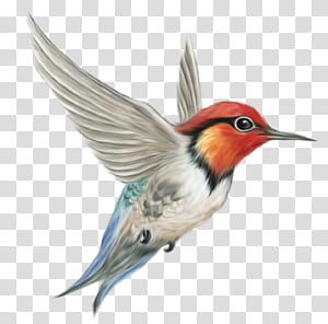 Blue Fresh Hummingbird Decorative Pattern Png And Clipart Humming Bird Art Hummingbird Pictures Hummingbird Art