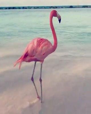 Beautiful flamingo bird love to do dance. Please follow Animals Board for more videos