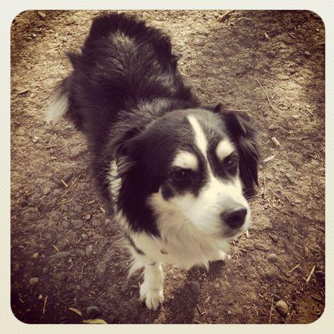 All Alone At Galvin Community Dog Park Santa Rosa Ca Angus