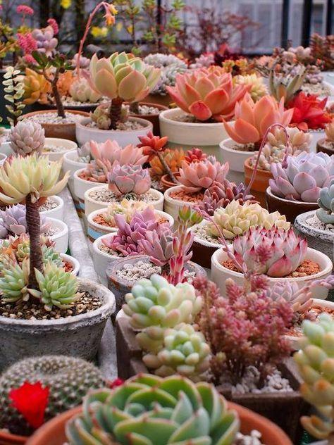 Il Colore E Poesia Dell Anima Succulents Colorful Succulents