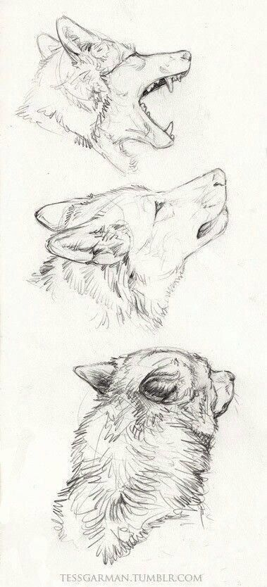 40 Free & Easy Animal Sketch Drawing Information & Ideas