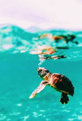 Vsco Turtles Google Search Picture Collage Wall Wall Collage Beach Wall Collage