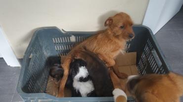 Hund Mix Mischling Hundin 2 Jahre Spanien Tiervermittlung Haustier Susse Tiere
