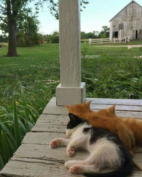 "oldfarmhouse: "" This is Farm Life💛 Bryartonfarms "" aesthetic country Simply Kinship Country Life, Country Living, Country Farm, Country Roads, Farm Animals, Cute Animals, Vie Simple, Cats And Kittens, Kitty Cats"