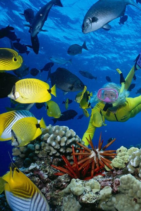 Top Ten Dives for South Africa : South Africa is the kind of country that makes your jaw drop at every turn. And underwater is no exception to this. @Buggl