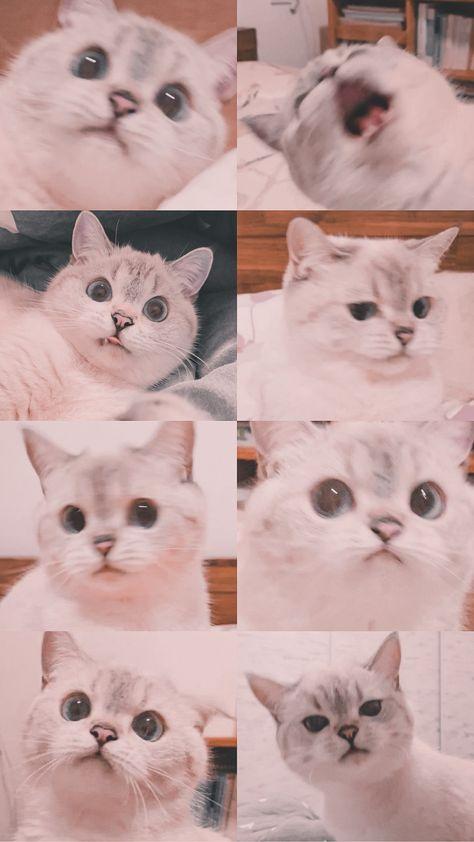Kucing Fotografi Hewan Anak Kucing Menggemaskan Gambar Kucing Lucu