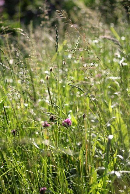 Im Garten Mit Mitglied Cosmea Im Sommer Leben Wir Praktisch Draussen Cosmea Garten