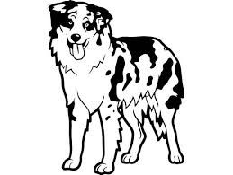 Image Result For Australian Shepherd Australian Shepherd Dog