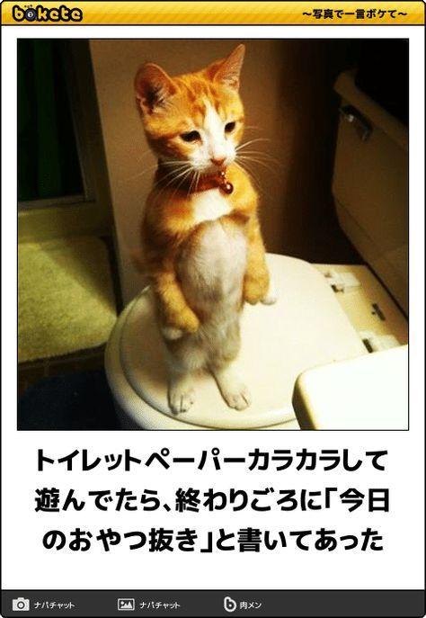 腹筋がよじれる 可愛い ネコ画像 におもしろい一言を添えた傑作ボケて60選 動物 おもしろ猫画像 おもしろい猫