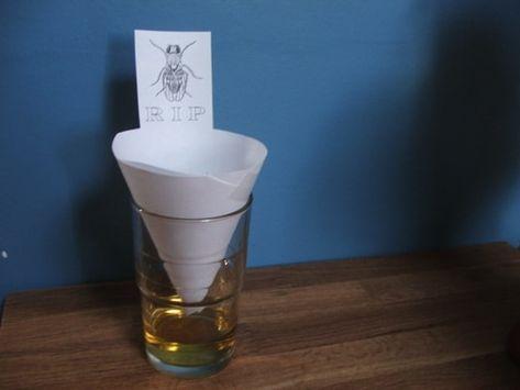 Una Trampa De La Abuela Para Deshacerse De Los Mosquitos Moscas