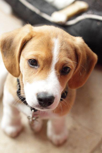 Morse Hunderassen Hunde Susse Hunde