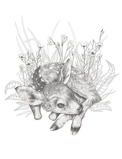 drawing animal Little Fawn Illustration Original Print - x 11 - Deer Art - Animal Drawing - Fine Art - Wall Art - Nursery Decor -