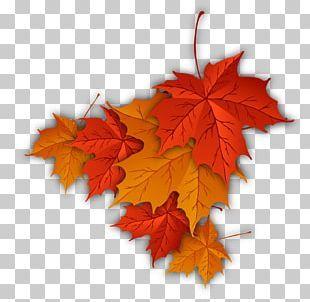 Autumn Leaf Color Autumn Leaf Color Maple Leaf Png Autumn Leaf Color Autumn Leaves Maple Leaf Drawing