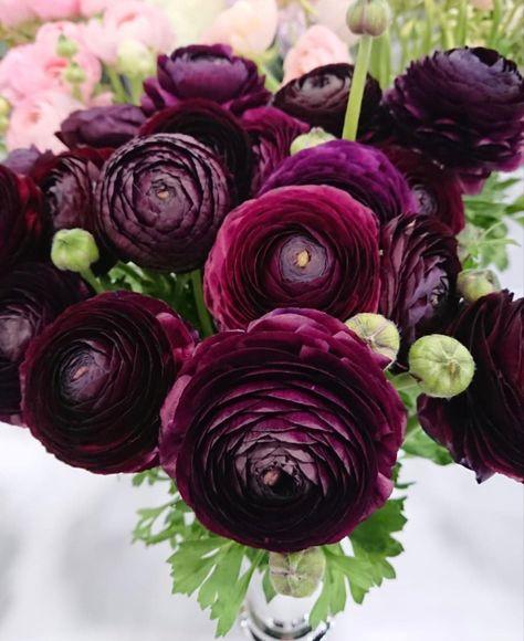 Exotic Flowers, Amazing Flowers, Beautiful Flowers, Tropical Flowers, Tea Rose Garden, Ranunculus Flowers, Peonies, Burgundy Flowers, Yellow Roses