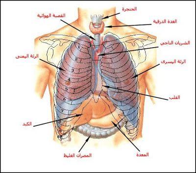 بحث حول الجهاز التنفسي أعضاء التنفس لدى الإنسان الموسوعة المدرسية Medical Words Human Body Anatomy Medical Art