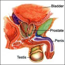 prostata stimulator test