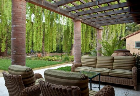Fast Growing Shade Trees That Make A Statement Pleasant