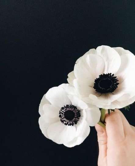 Super Flowers Tattoo Minimalist Black And White 57 Ideas Anemone Flower White Poppy Flower Anenome Flower