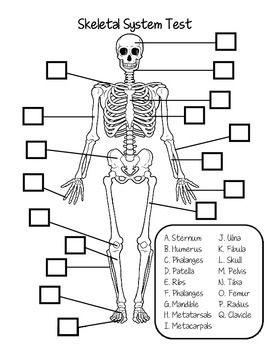Pin On Human Body