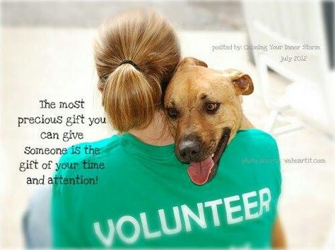 Give Freely Volunteering With Animals Animal Shelter Volunteer