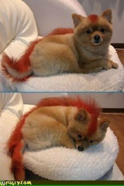 25 Hilarious Pet Haircut Fails Animal Pictures Pets Dog Fails