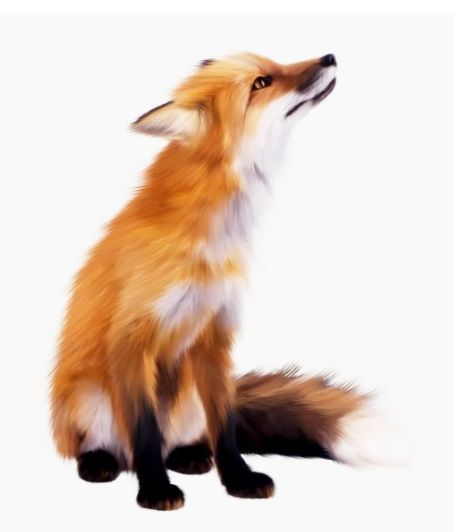 Dessin Renard Fox Roux Animal Bete Fox Art