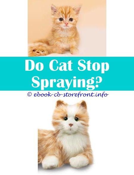 10 Bewitching How To Stop A Cat Spraying Inside The House