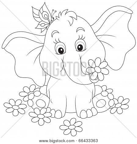 Baby Elephant Sitting With A Butterfly Among Daisies Poster Id 66433363 Elephant Coloring Page Elephant Drawing Art Drawings For Kids